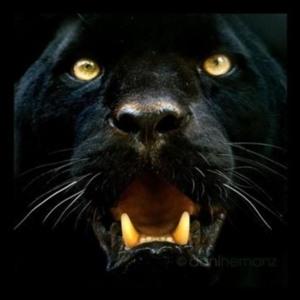 Jaguar (Edilson C. Araujo)