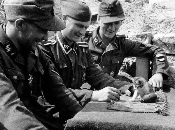 war cat 1